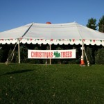 Well shaded Christmas Trees