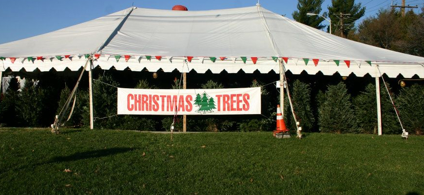 Retail Christmas Tree Lots in Frederick, MD and Greenville, NC