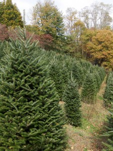 Tips on Choosing the right Christmas Tree